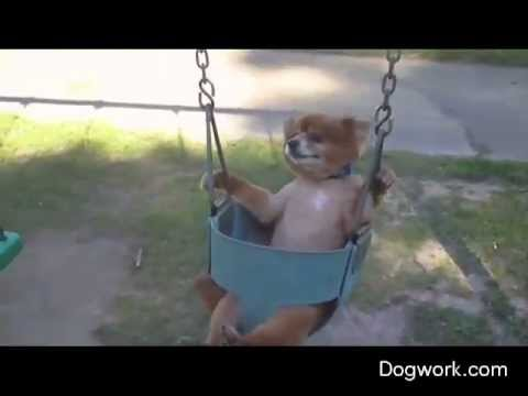 Dogs On A Swing.