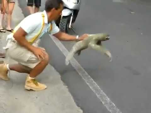 Sloth Crossing The Road – I Believe I Can Fly
