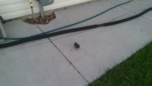 Young Bird West Fargo