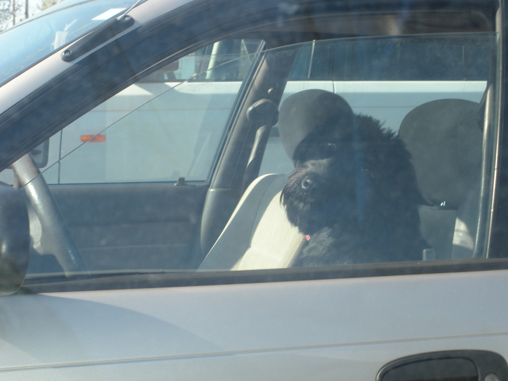 UPDATE: Driving Dog Monty Refused Bail After Arrest