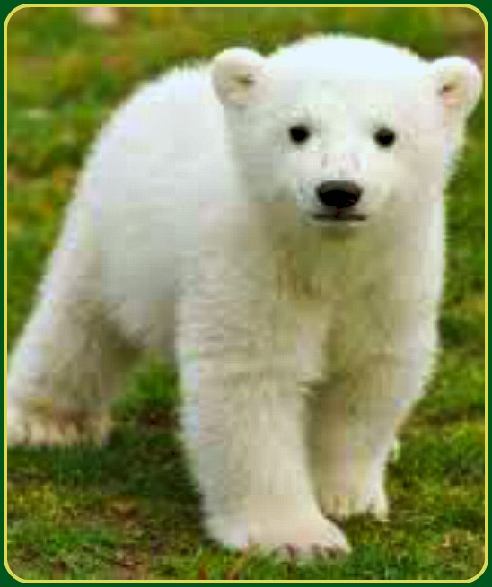 Dog Show Winner Actually A Polar Bear!
