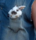 Bunny In A Pocket