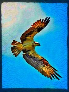 Osprey1PX1