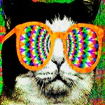 Survey Says: Many FM-area cats are tripping on LSD.