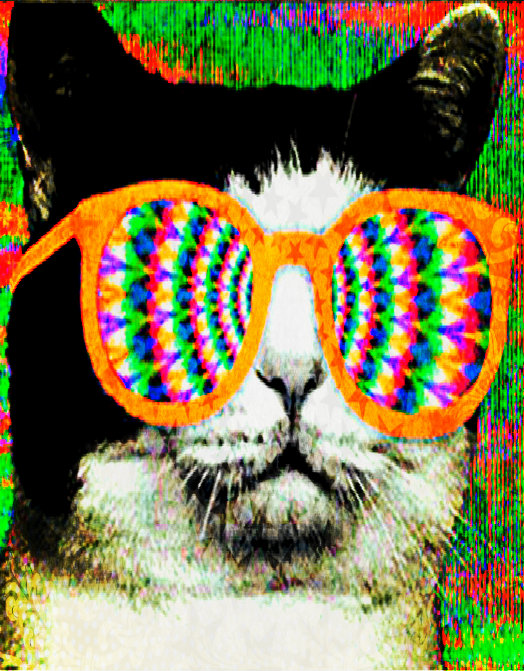 Area Cats Tripping On Acid