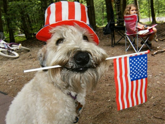 4th of july dog 4