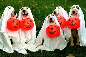 Ghost dogs Halloween