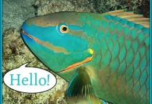 Maui Parrot-Fish Learns To Speak Fluent Underwater English