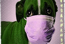 New FDA Drug Approved For Your Sick Dog