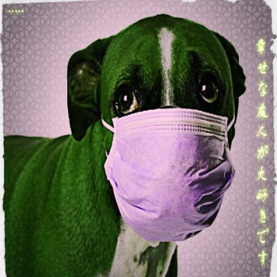Is your dog sicker than a dog?