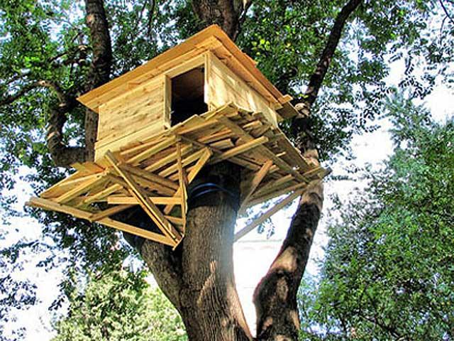 Fargo man renting out tree house fm observer fargo Kids tree houses