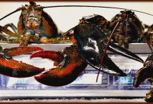 Lady Attacked By Lobsters In Grocery Seafood Section