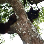 Fargo Cat In Tree