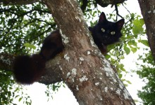 Police Shoot And Kill Cat For Climbing Tree Illegally