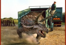 Red River Zoo Soon Adding One Large Triceratops