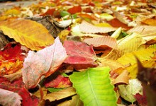 Changing and Falling Leaves Concern EPA