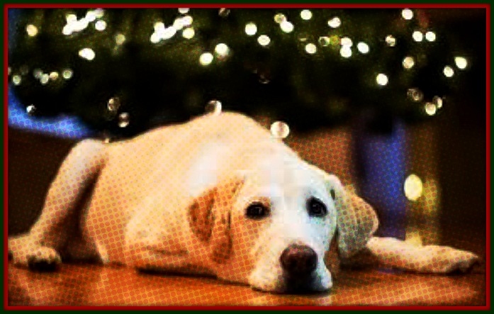 Ask FMO: How To Keep Your Dog From Pissing On Your Christmas Tree ...