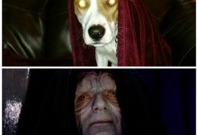 Advice: What To Do If Your Dog Thinks He's Darth Sidius