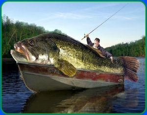 Long Lake is one of the best fishing lakes in Minnesota.