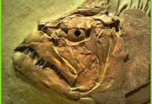 FMO Planning An Exciting Bus Tour Excursion For Our Readers To The Fossil Fish Festival