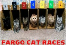 Cat Racing Coming To Fargo