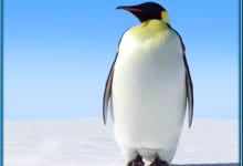 Emperor Penguin Elected President Of Antarctica