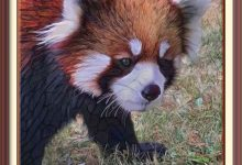 Bad Red Panda Gets Solitary Confinement After Escaping From The Red River Zoo