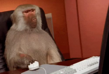 Monkey Makes $34 Million In Stock Market From A $5 Investment