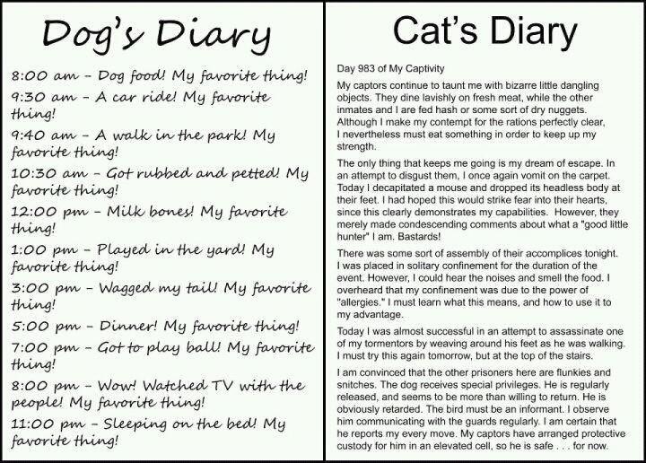 Dog's Diary vs Cat's Diary