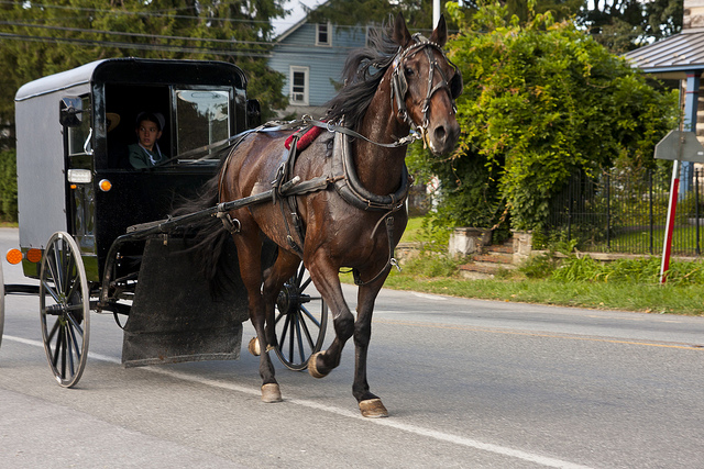 Horse Buggy Collides With Car On Interstate.  Horse Takes a Dump.