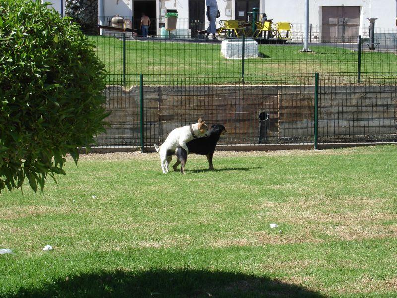 Sting Operation At Dog Park Results In Arrest