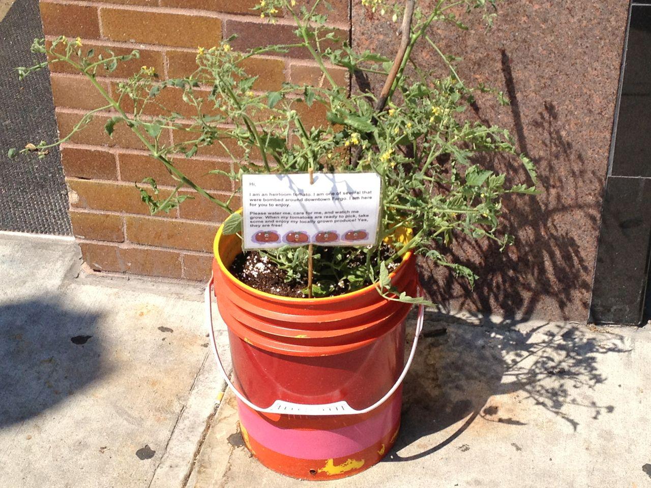 Tomato Plant Bombs Causing Fear of Terrorist Activity