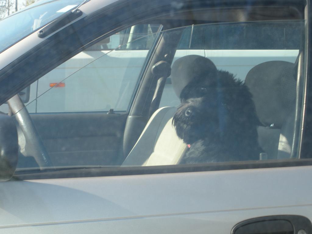 UPDATE: Driving Dog Monty Refused Bail After Arrest