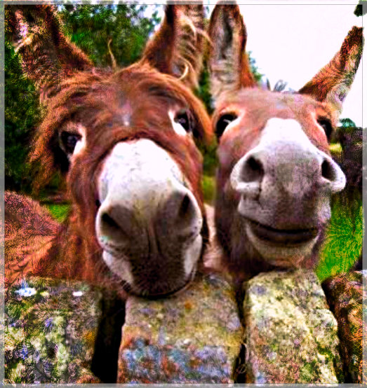 Gay Love Donkeys To Be Married