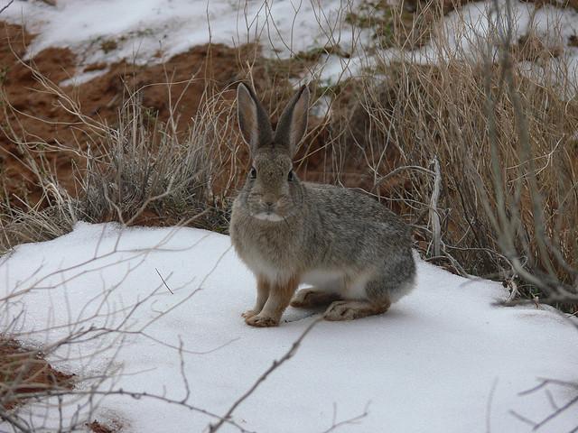Giant Rabbits Are Taking Over Fargo