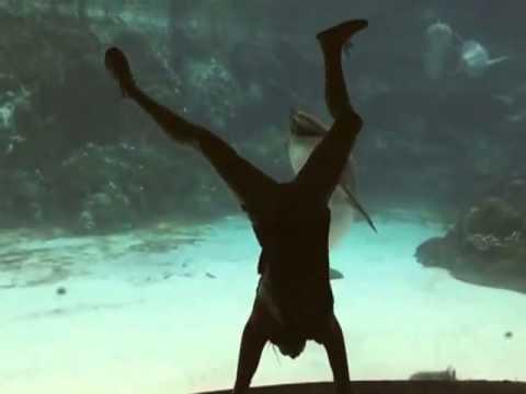 Girl's Gymnastics Show Makes Dolphin Laugh