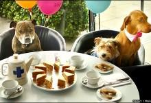 Doug's Doggy Diner to Open In Fargo