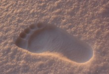 Casselton Resident Says He Has Proof Of A Yeti