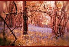 Beautiful Meadow A Killing Field For LandShark