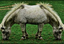 Cloned Cloners Create Two-Headed Mule