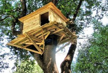 Fargo Man Allegedly Renting Out Tree House