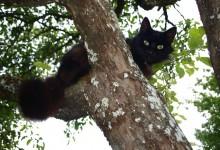 Police Shoot And Kill Cat For Climbing Tree Illegally