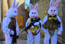 Feral Rabbits Being Readied To Secure Southern Border