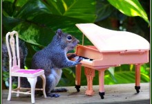 Area Outdoor Pianos Maybe Not Such A Grand Idea