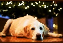 Ask FMO: How To Keep Your Dog From Pissing On Your Christmas Tree