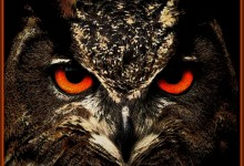 It's The Year Of The Owl
