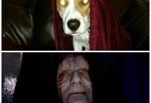Advice: What To Do If Your Dog Thinks He's Darth Sidius