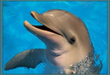 Dolphin Correctly Picks Every Game In First Two Rounds Of March Madness