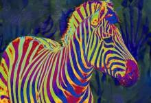 Wild Zebra Continues To Run Rings Around Fargo