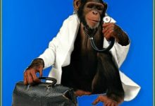 Fargo Hospital Hires First Monkey Doctor